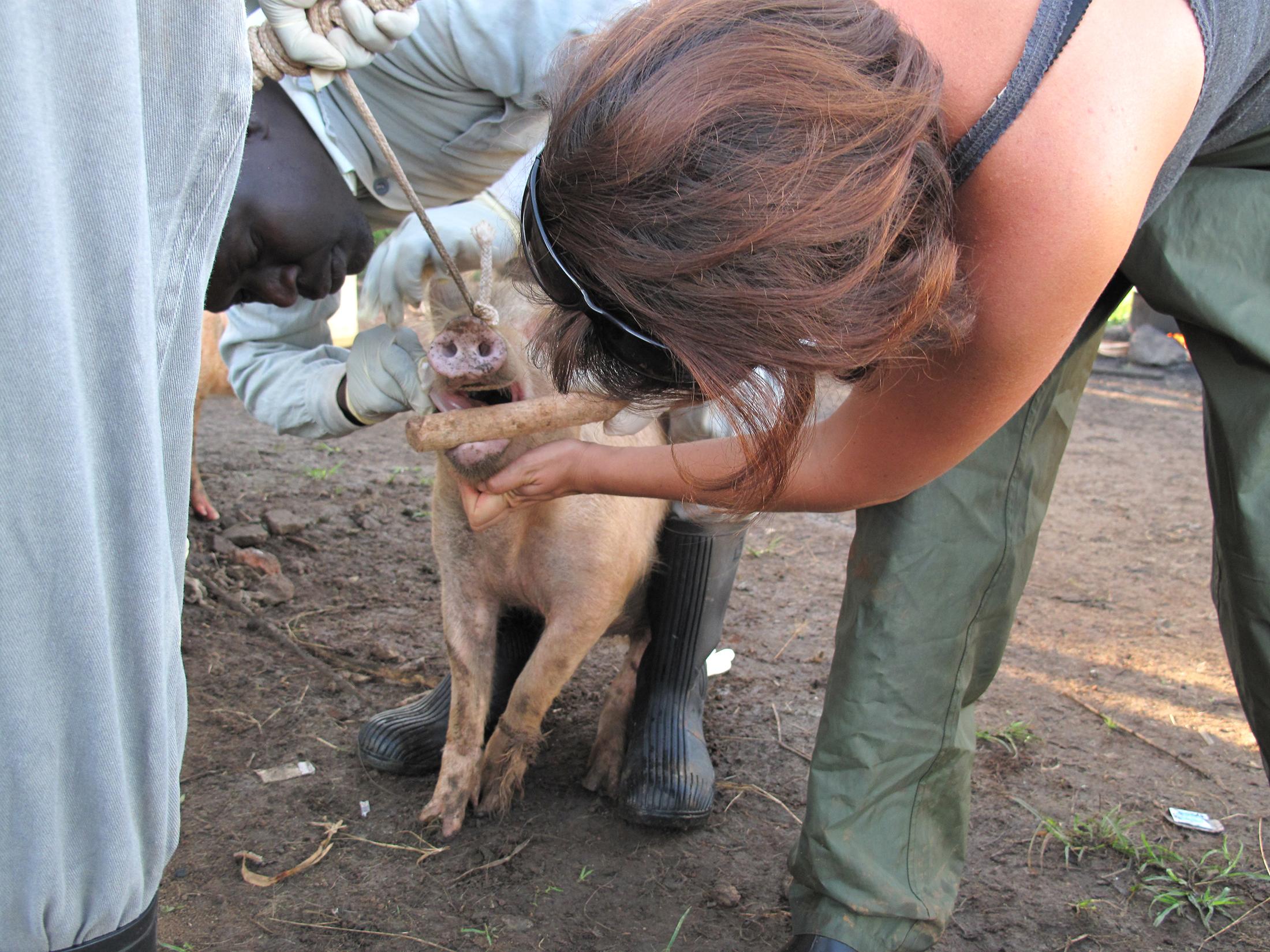 pig inspection cysticercosis lgt tmb 1200v jpg?Culture=en&sfvrsn=7c8f1a7d 7.