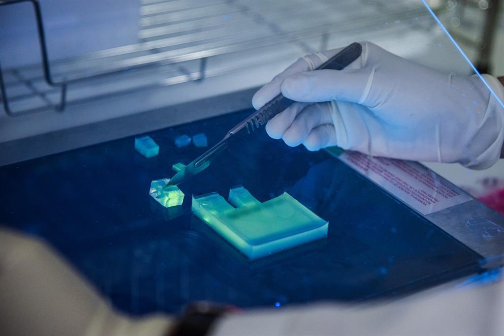 A laboratory technician cuts a piece of gel