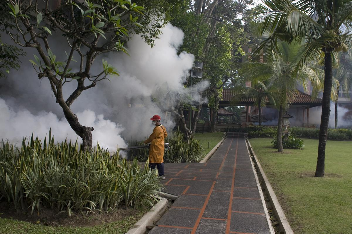 WHO scales up response to worldwide surge in dengue