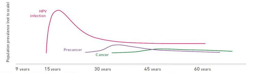 population hpv cancer precancer
