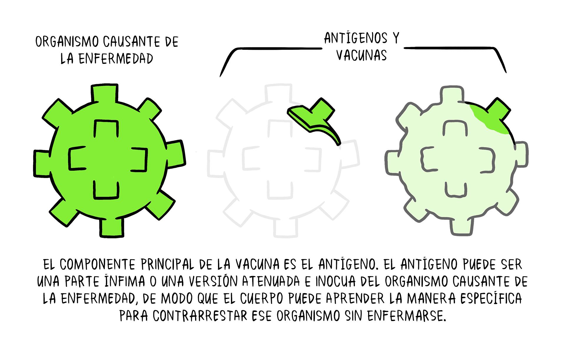 Vaccines topic 2 01 Vaccine Antigens