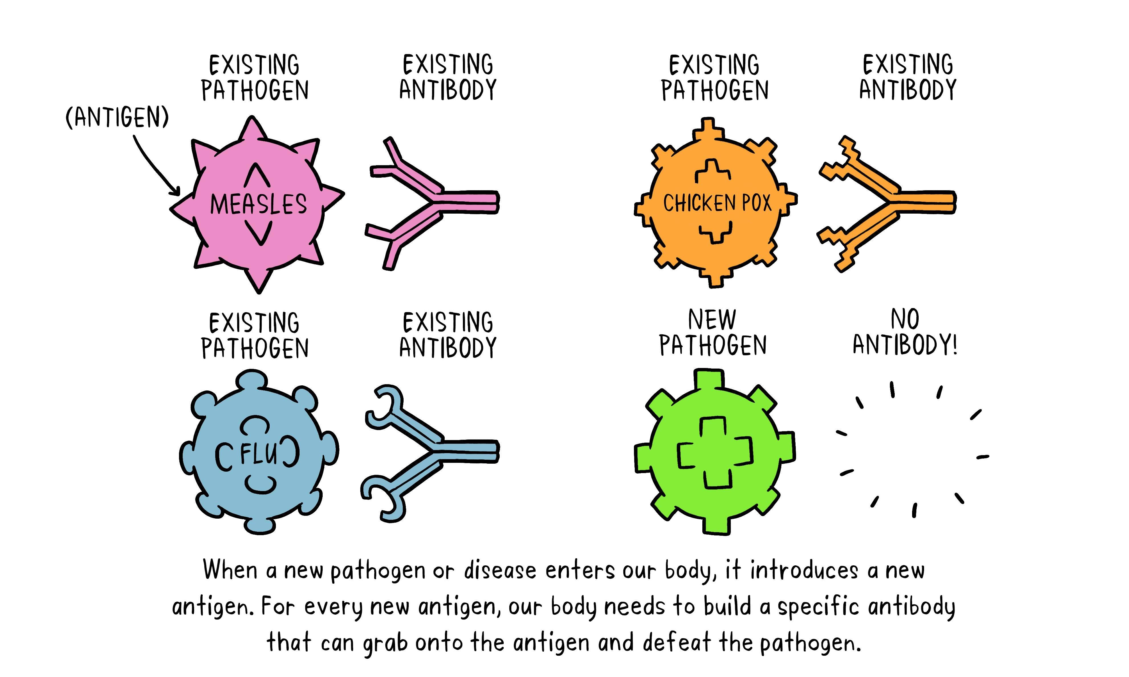 Vaccines Antibody illustration 01_29 Oct