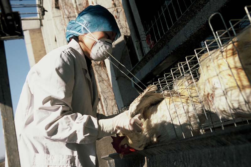 Influenza (Avian and other zoonotic)